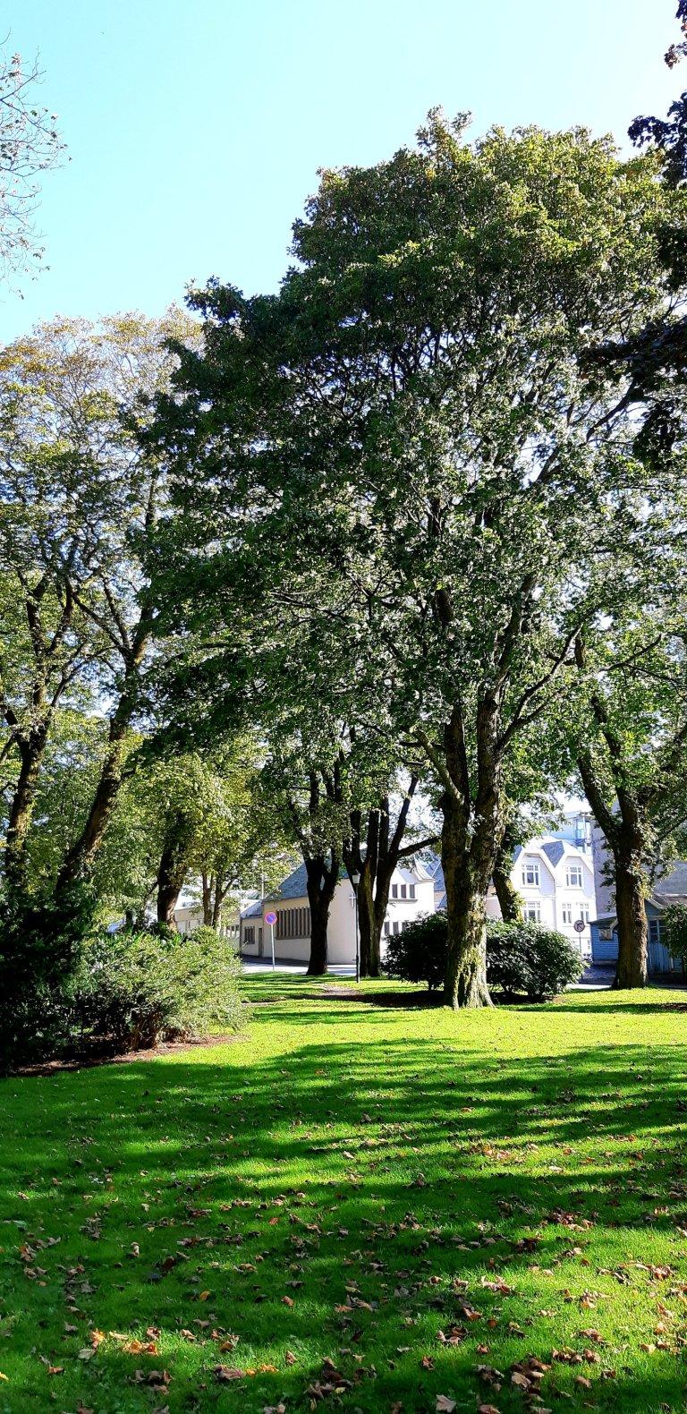 Haugesund park